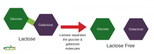 graphic of lactose and lactose free molecules