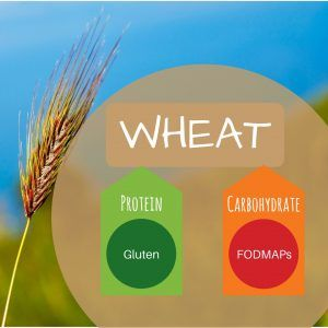 graphic of wheat, protein and carbohydrate
